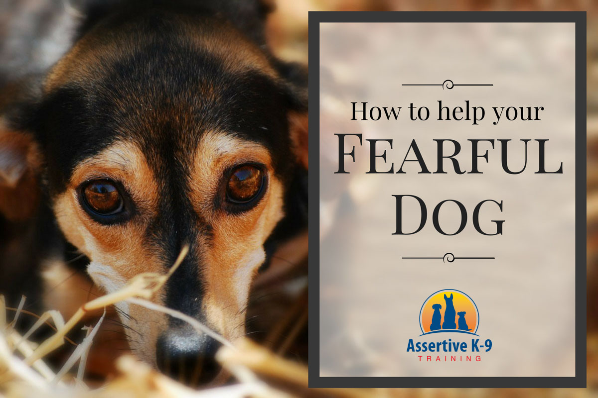 How To Help Fearful Dogs