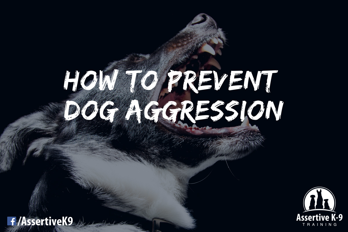 How To Prevent Dog Aggression